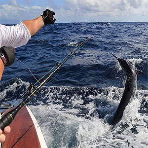 Sports Fishing Charters